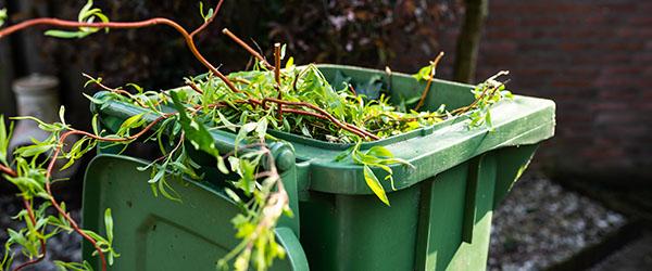 branches poubelles enlevement