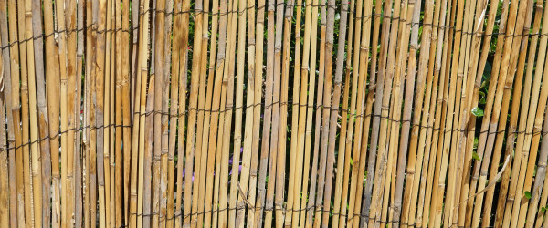 canisse bamboo