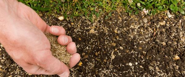 date semis pelouse