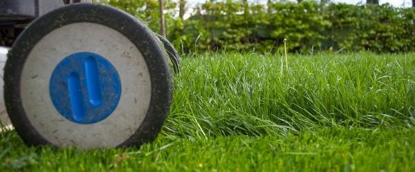 entretien herbe