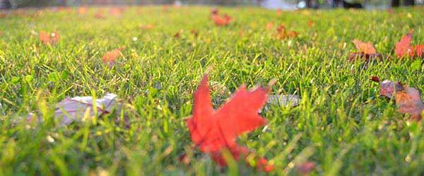 jardin feuilles 1