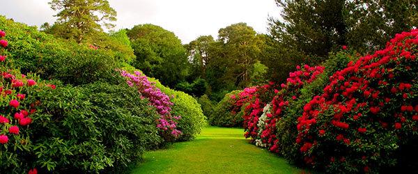 jardin gazon arbustes
