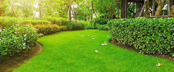 magnifique gazon dans un jardin exotique