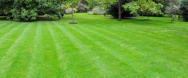 refaire sa pelouse quel est le prix gazon au m2. Black Bedroom Furniture Sets. Home Design Ideas