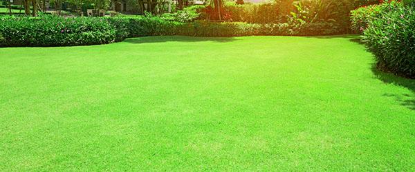 magnifique pelouse