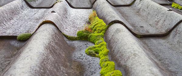 mousse sur toit