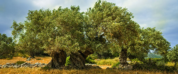 olivier tailler tarif