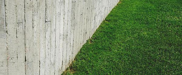 pelouse et cloture