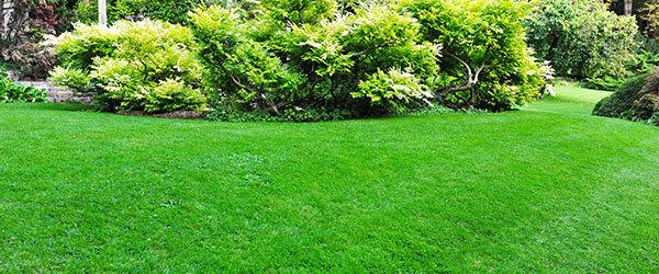 refaire pelouse verte