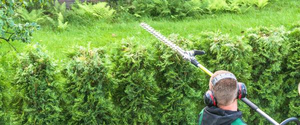tarif jardinier taille haie