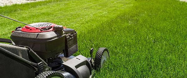 tarif pelouse moderne