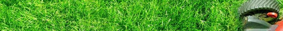 prix tonte pelouse
