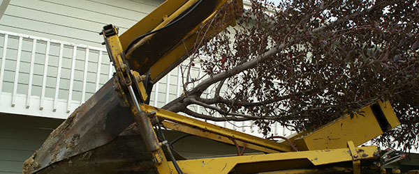 transplanter arbre entreprise