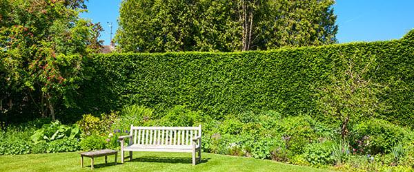 troene jardin banc
